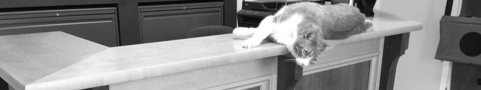 Front desk with cats