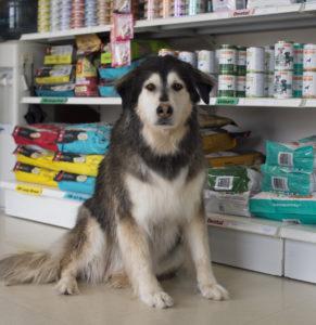 A dog near the pet food.