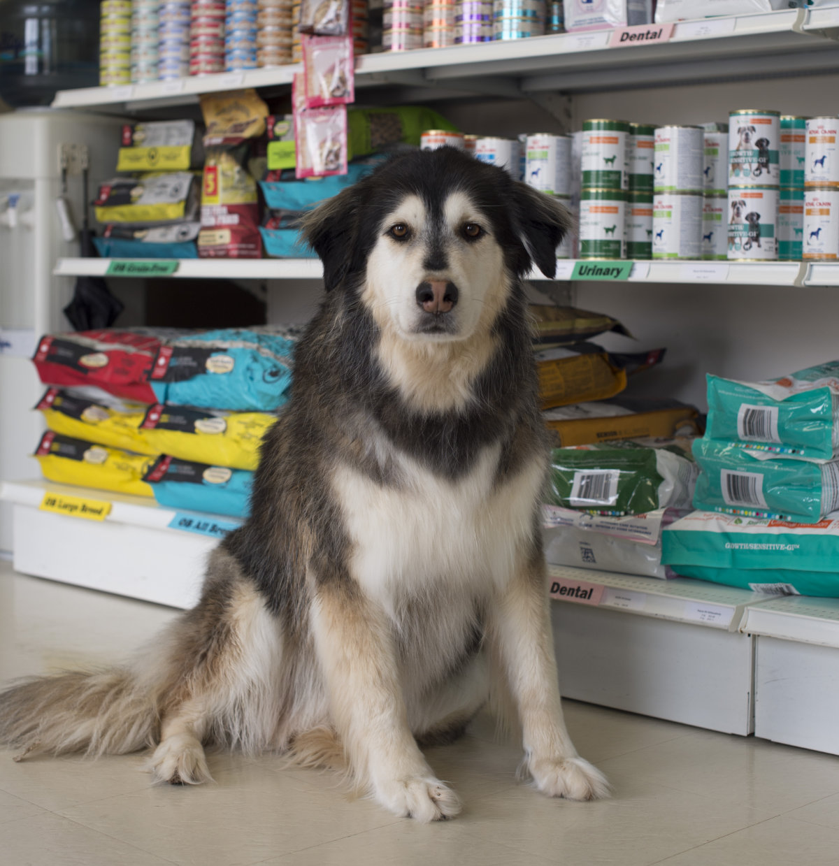Dogs Home Near Rugeley: · Park Avenue Veterinary Services