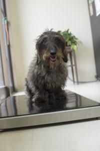 Dog on scale.