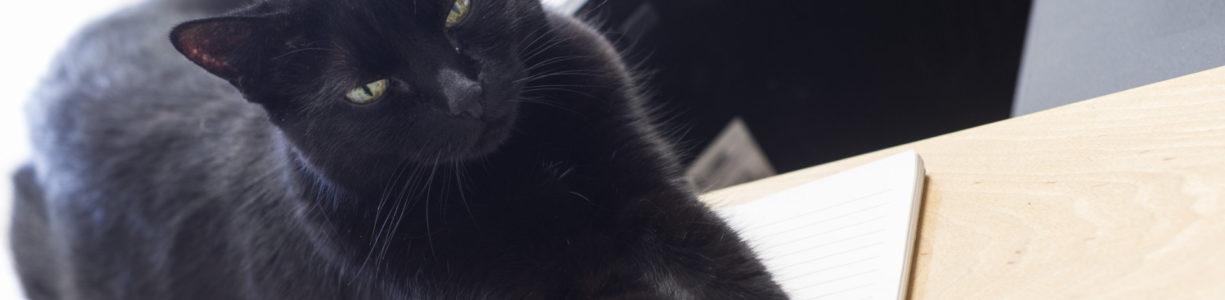 Black cat on desk.
