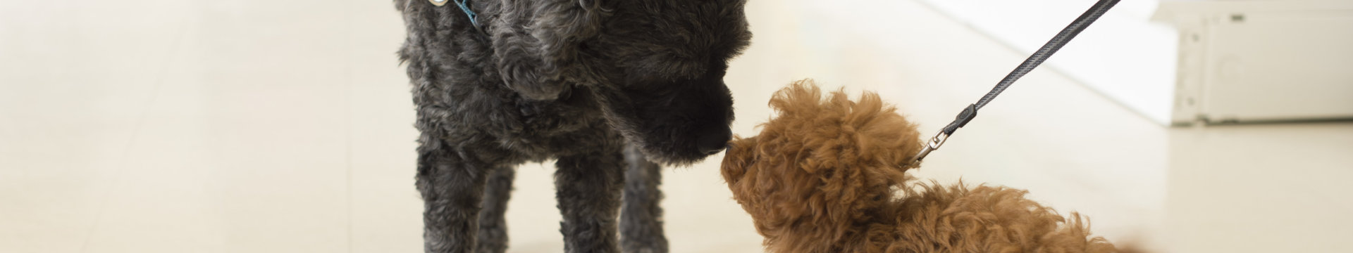 Two dogs meeting
